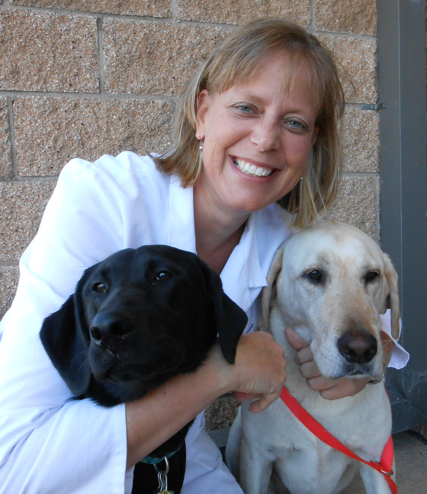 Breed of the Month August 2015 Labrador Retriever with Dr. Ann Sampson